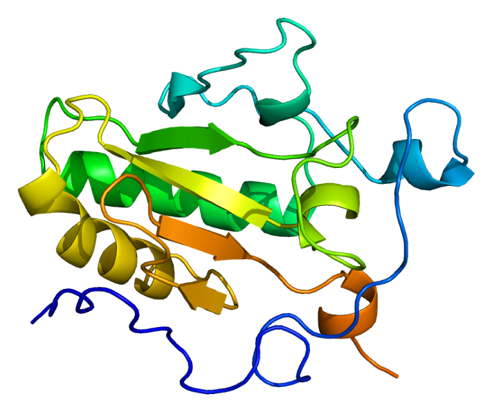 Protein IHH PDB 1vhh.png