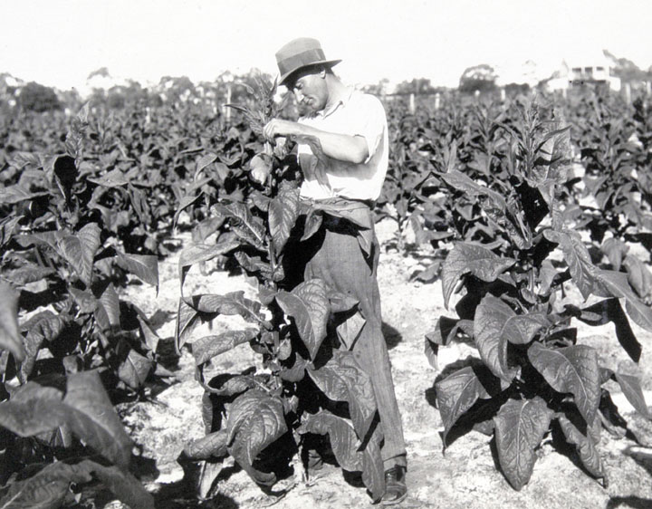 An introduction to the development of agriculture in the united states before the first world war