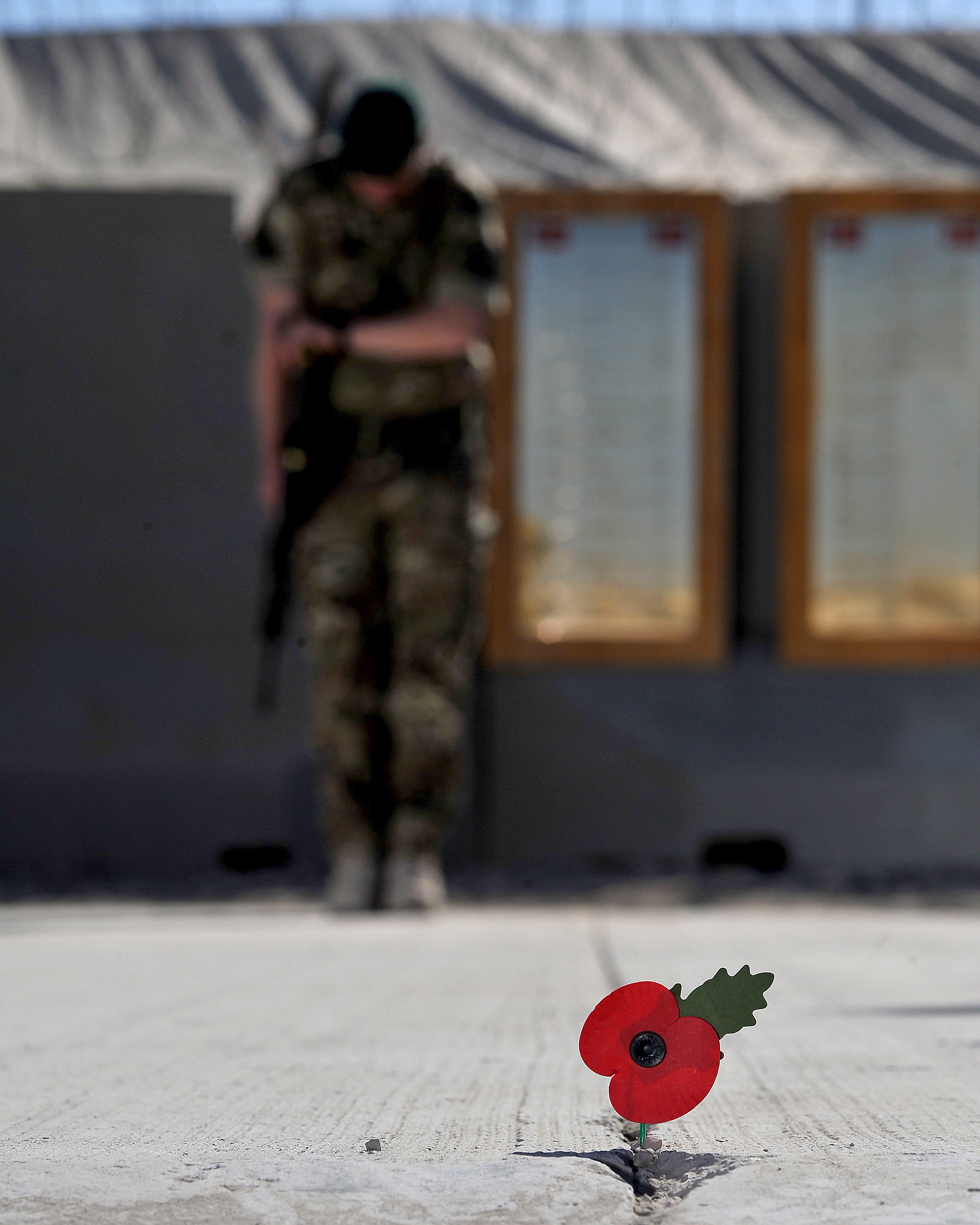 file royal marine with poppy during remembrance day service in