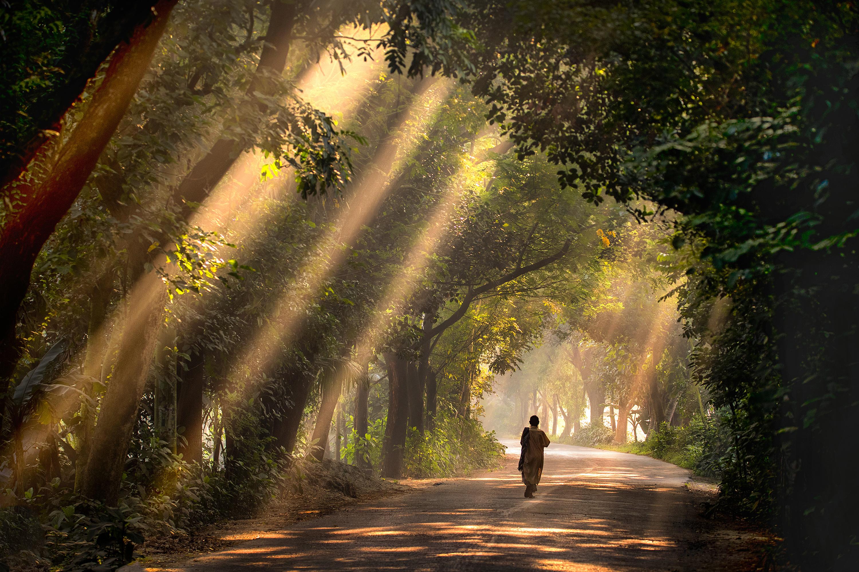 Satchari National Park, Bangladesh