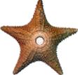 StarfishBarnstar.png