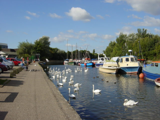 Swans and pleasurecraft at Spike Island, Widnes - geograph.org.uk - 40758