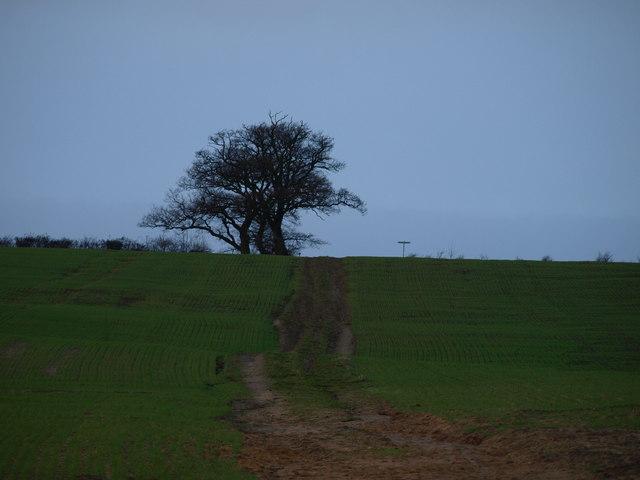 The Greensand Ridge Walk - geograph.org.uk - 642794