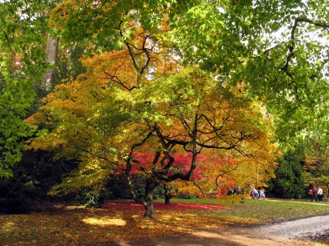 Westonbirt Arboretum - geograph.org.uk - 3338
