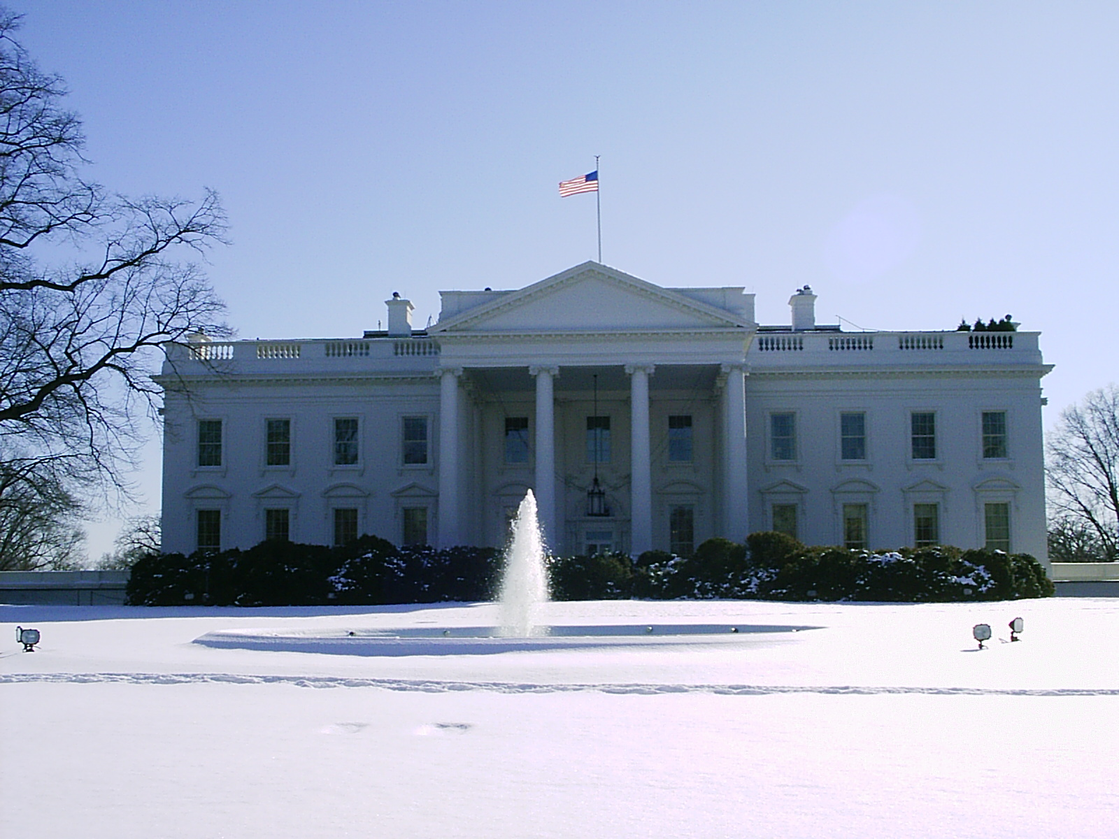 history of white house christmas trees