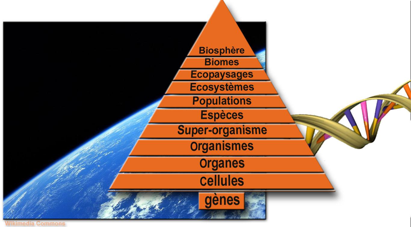 Fichier chelles vivant g nes biosph wikip dia - Comment les cambrioleurs reperent ...
