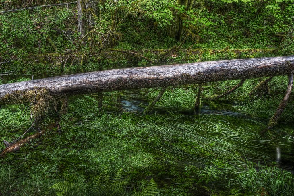 File:清流にかかる倒木 A Wood above Fresh Stream (8316775913).jpg