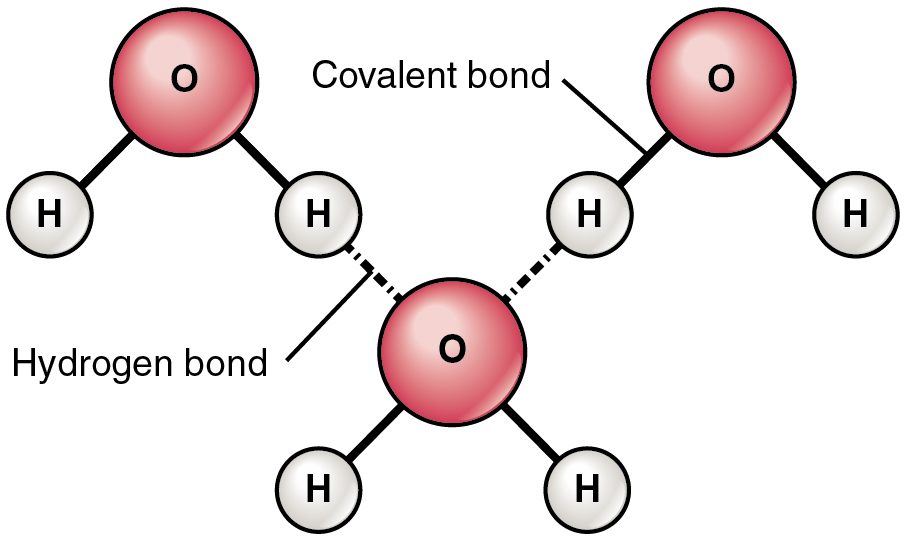 File 210 Hydrogen Bonds Between Water Molecules 01 Jpg