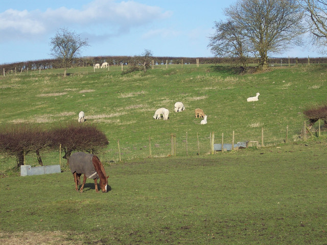 A pony and alpaca at Fonthill Bishop - geograph.org.uk - 360361