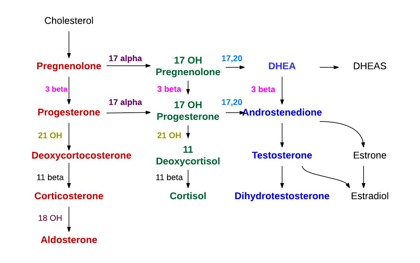 c19 steroids wiki