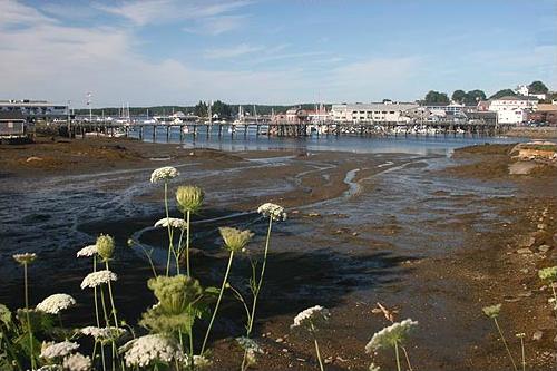 File:Boothbay Harbor, summer morning at low tide.jpg