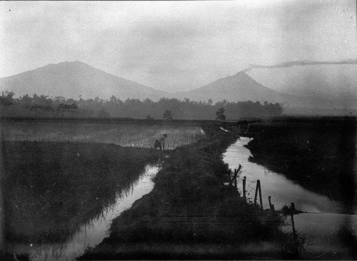 File:COLLECTIE TROPENMUSEUM Rijstvelden bij de vulkanen Merapi en Merbaboe op Java. TMnr 60007940.jpg