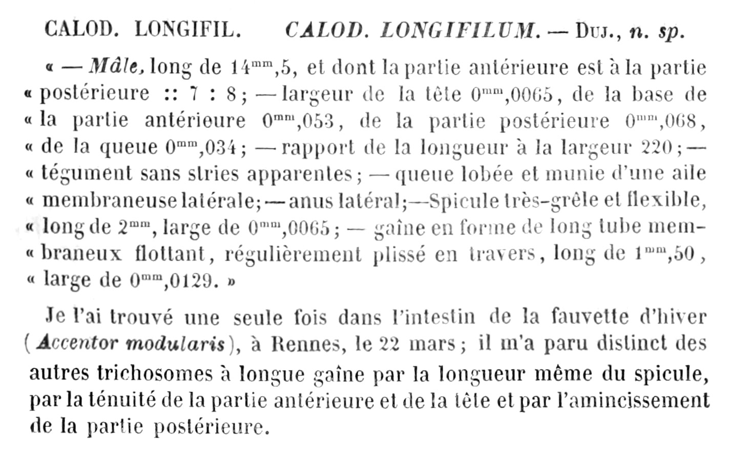 Fichier calodium longifilum dujardin 1845 diagnosis for Dujardin automobile
