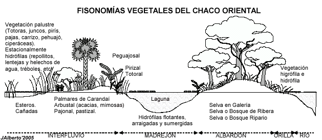 Chacor4.png