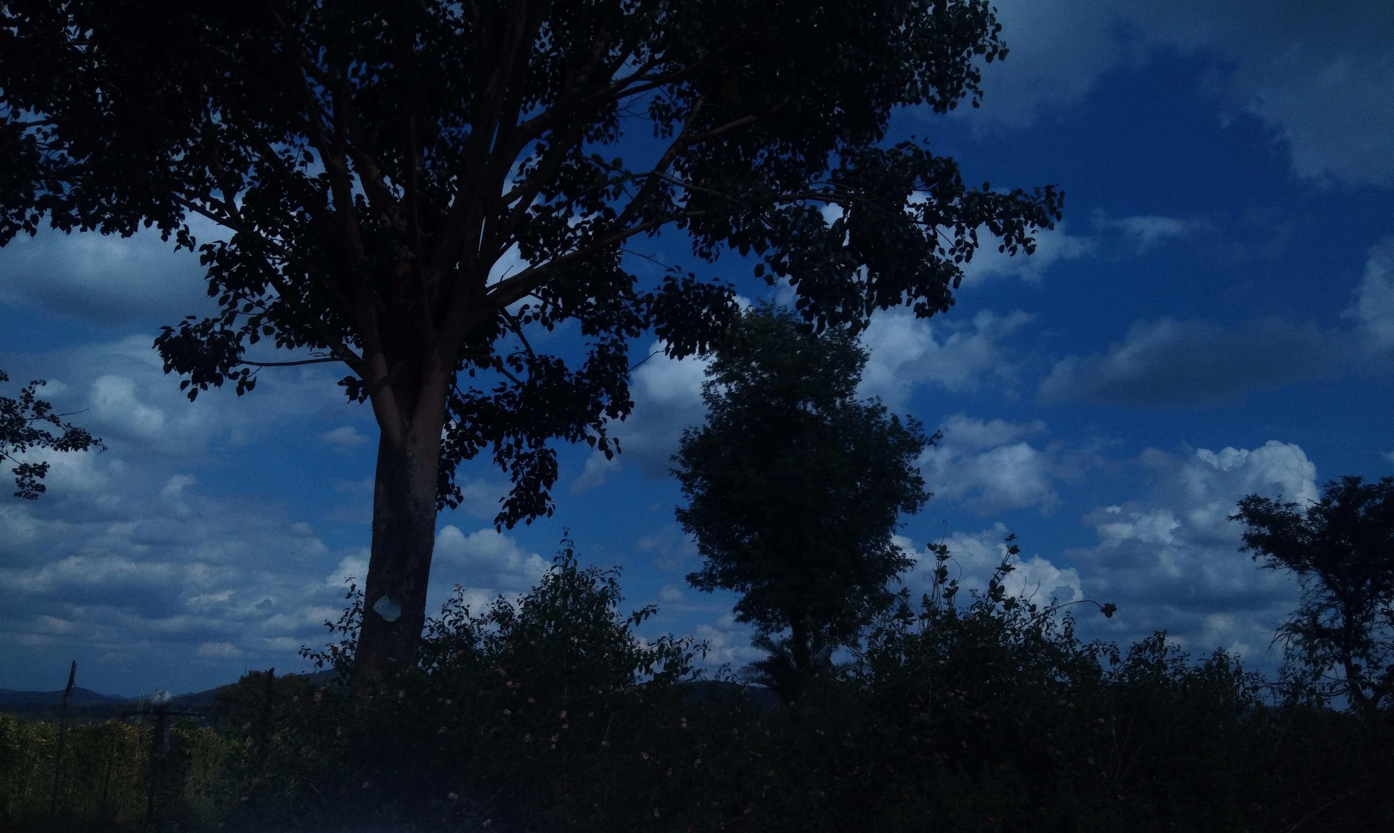 File:Dark Nature.jpg - Wikimedia Commons