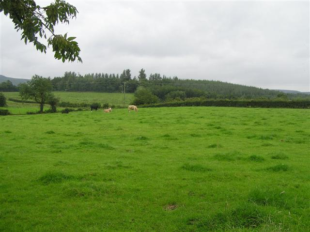 Derryloman Townland Lisnaskea Forest is in the distance