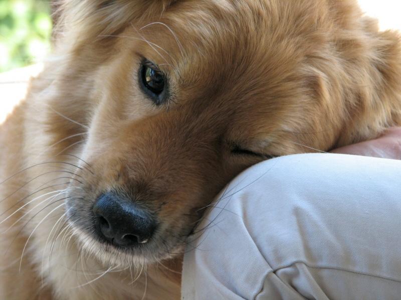 Dog's Love