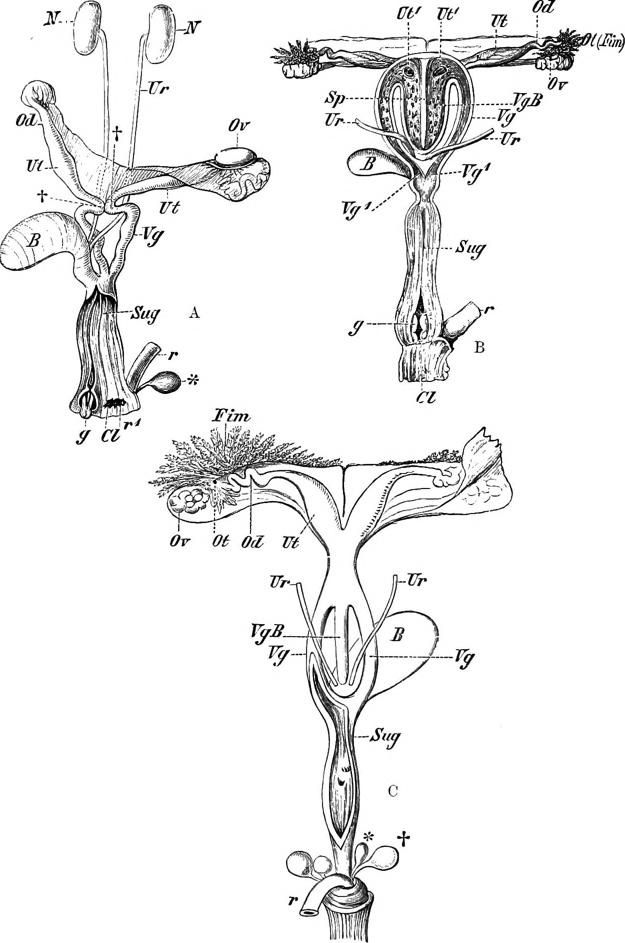 File:Elements of the comparative anatomy of vertebrates (1897 ...