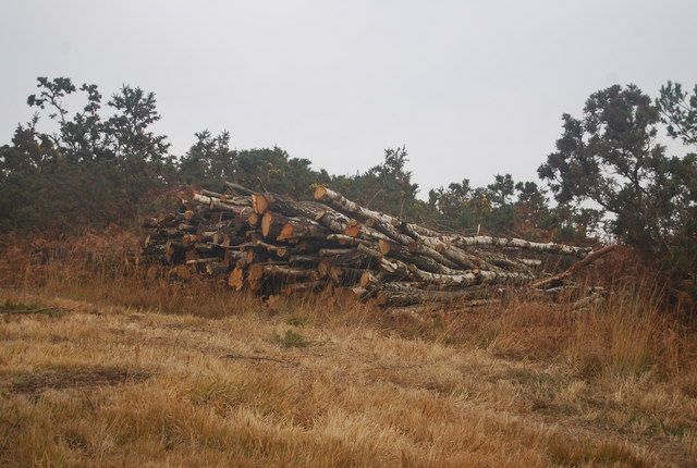 Felled trees by the Vanguard Way - geograph.org.uk - 1583768