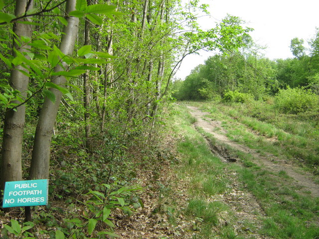 Footpath in Mereworth Woods - geograph.org.uk - 1292835