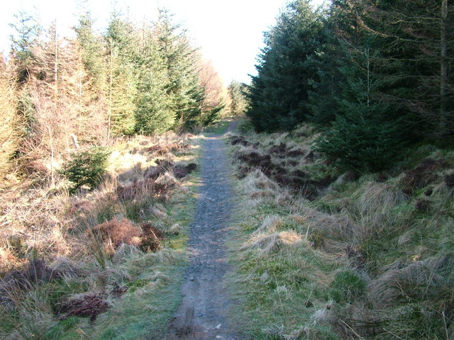 Forest path, Heald Brow - geograph.org.uk - 1232646