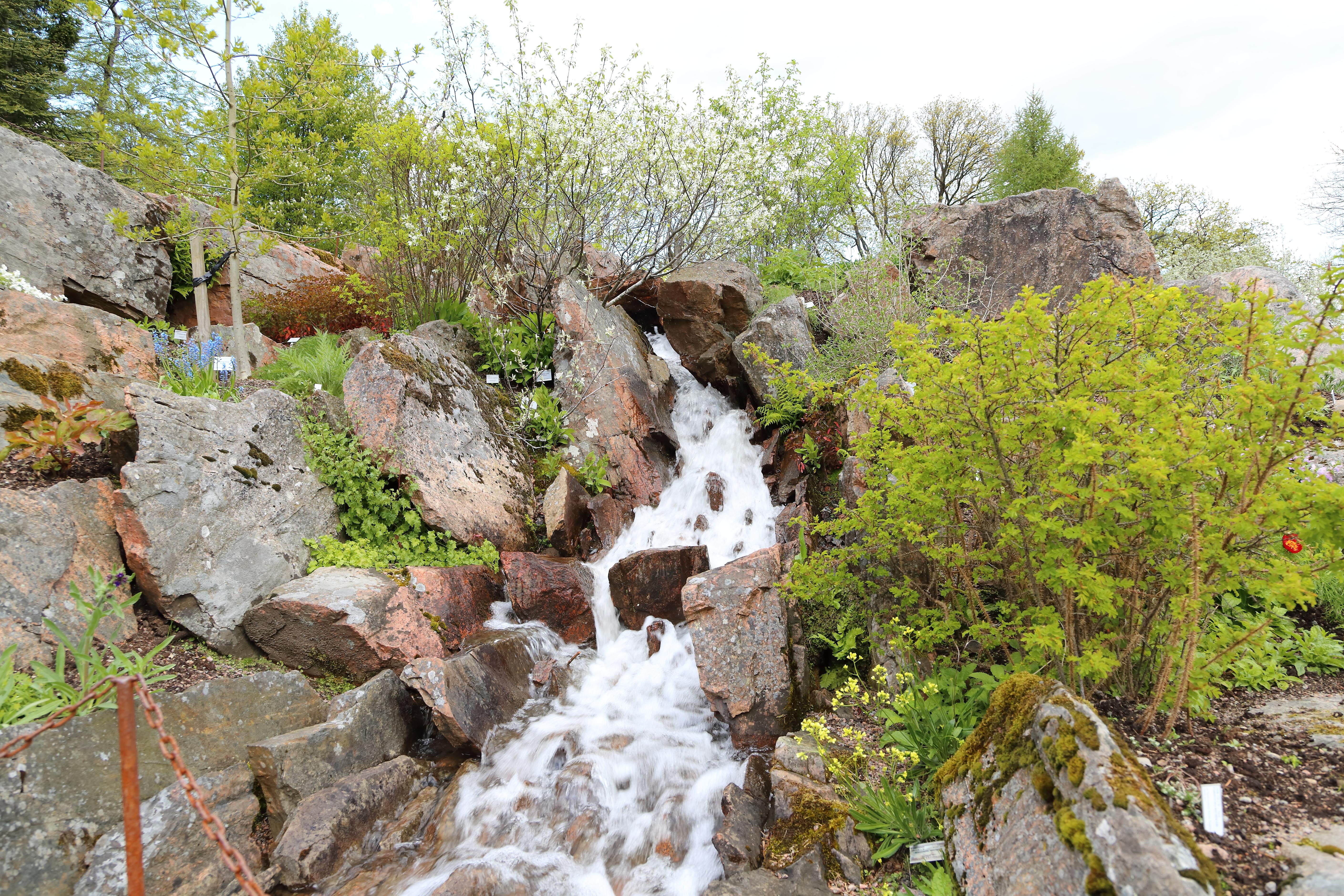 File:göteborgs botaniska trädgård img 6562.jpg   wikimedia commons