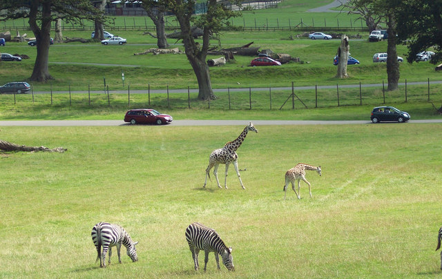 google maps project with File Giraffe And Zebra At Longleat Safari Park   Geograph Org Uk   315233 on File bullrushes  coots and water  near south cerney   geograph org uk   484361 furthermore File Pontefract Castle 02 besides 49530798 further 50521795 furthermore Mali Ston.