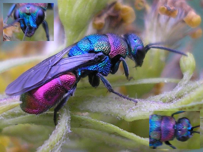 Böcek İlaçlama Firmaları Bakırköy