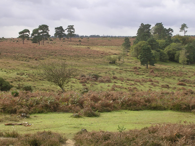 Heathland to the west of Cadman's Pool, New Forest - geograph.org.uk - 69295