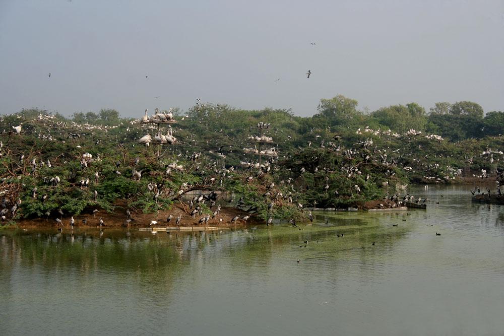 uppalapadu bird sanctuary wikipedia