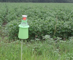 English: Integrated pest management – An IPM b...