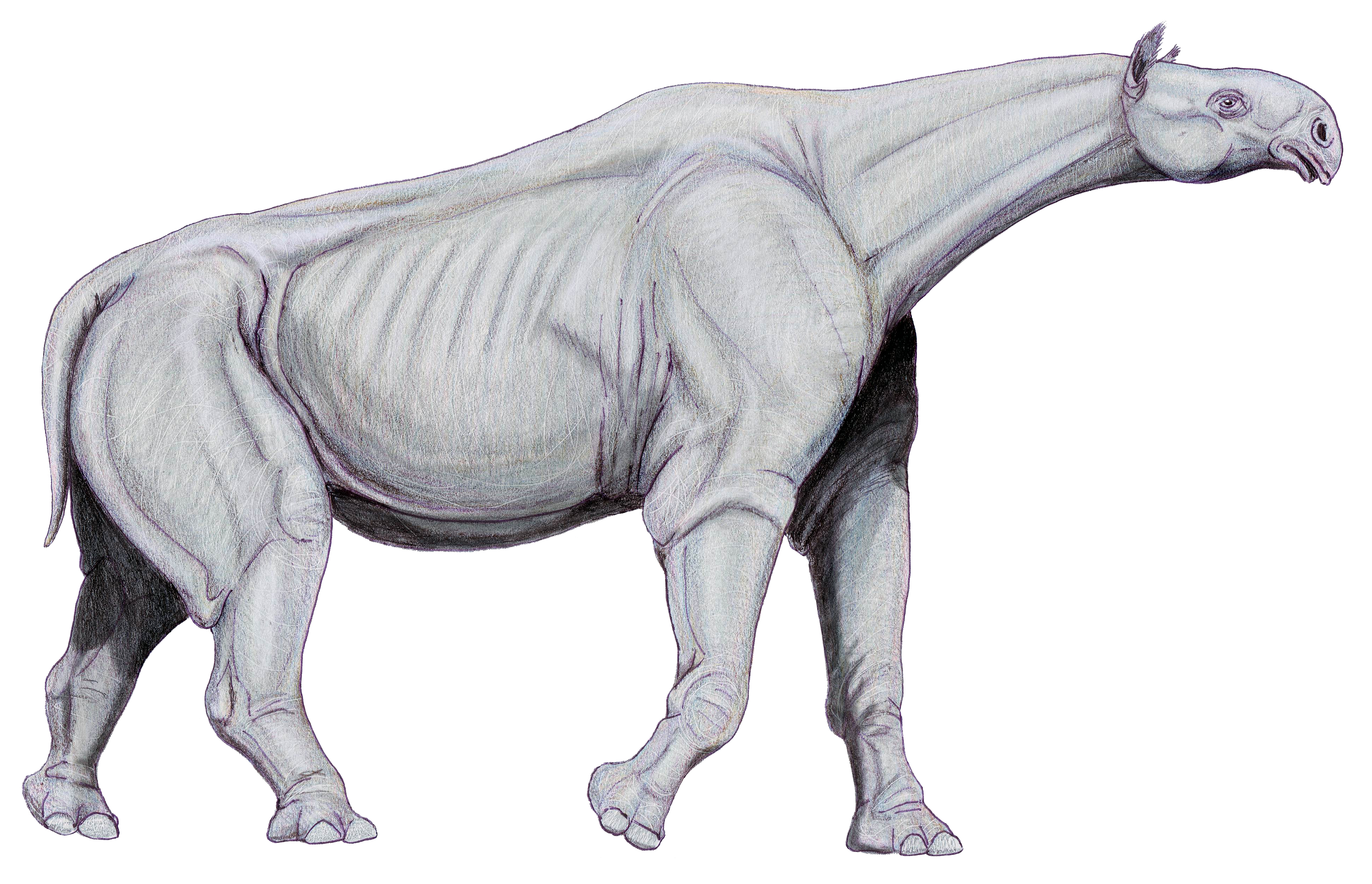 http://upload.wikimedia.org/wikipedia/commons/0/0f/Indricotherium11.jpg