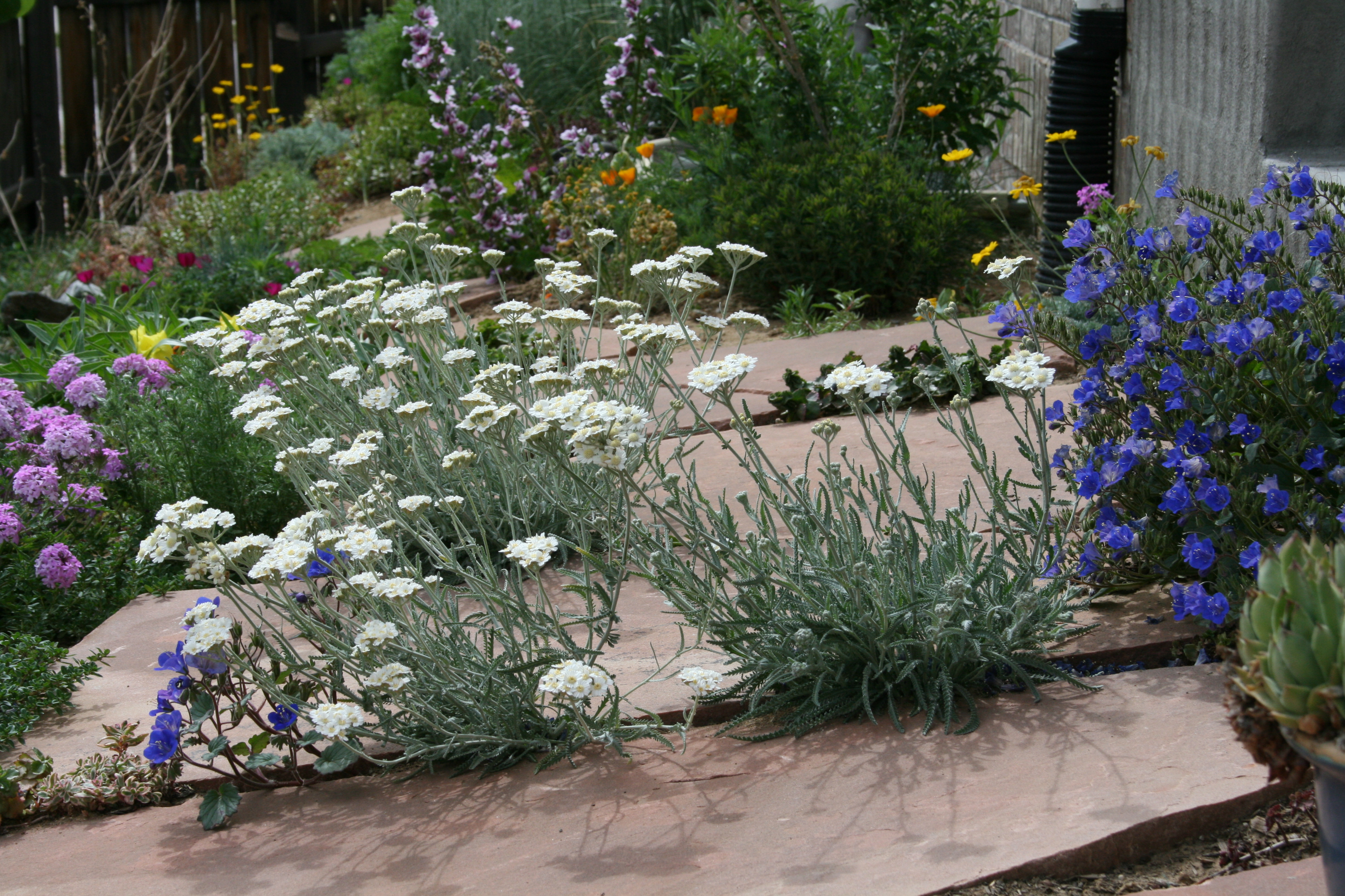 dalles pour jardin