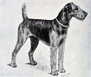 Kenmare Sorceress dog