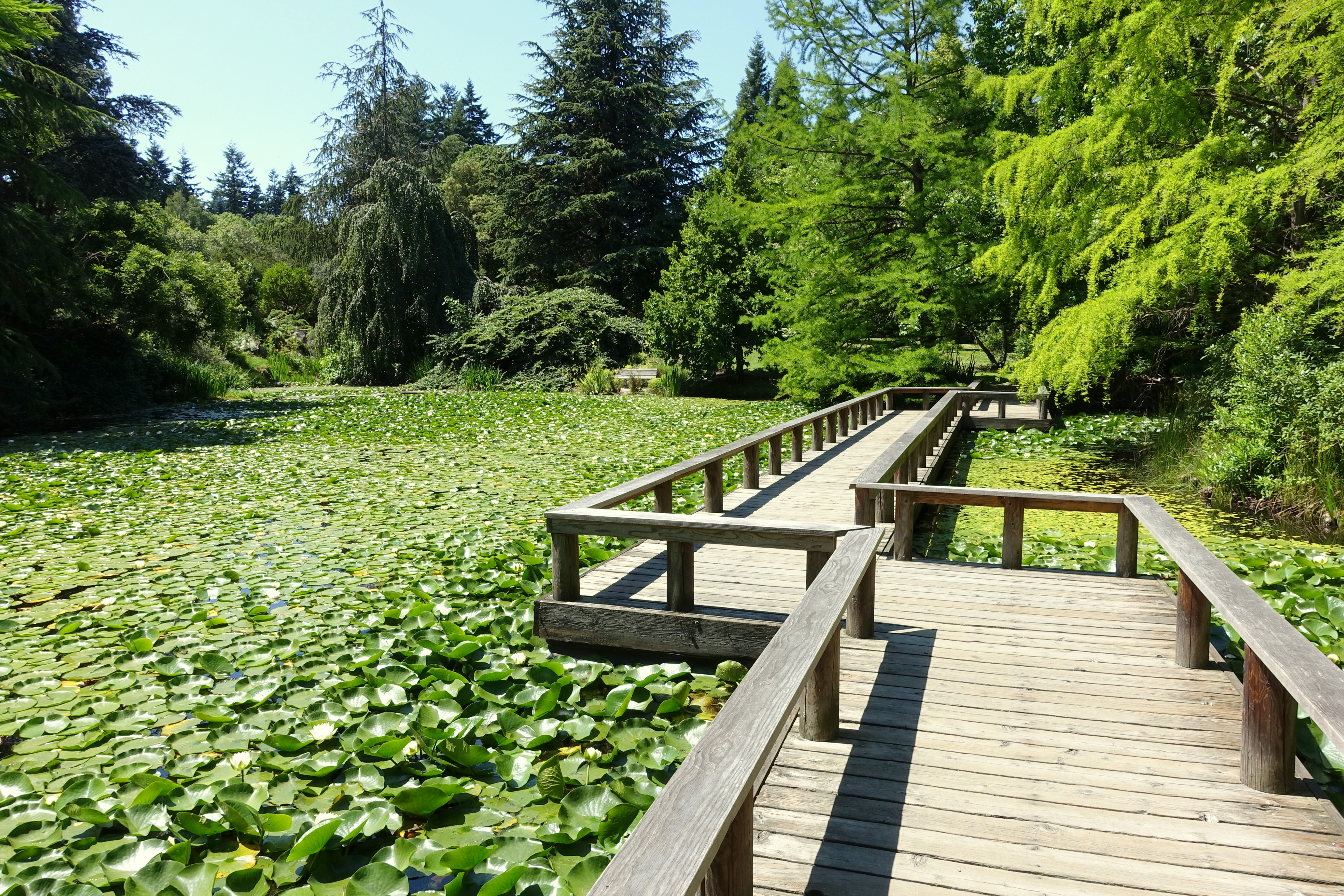 File:Lake View   VanDusen Botanical Garden   Vancouver, BC   DSC07369