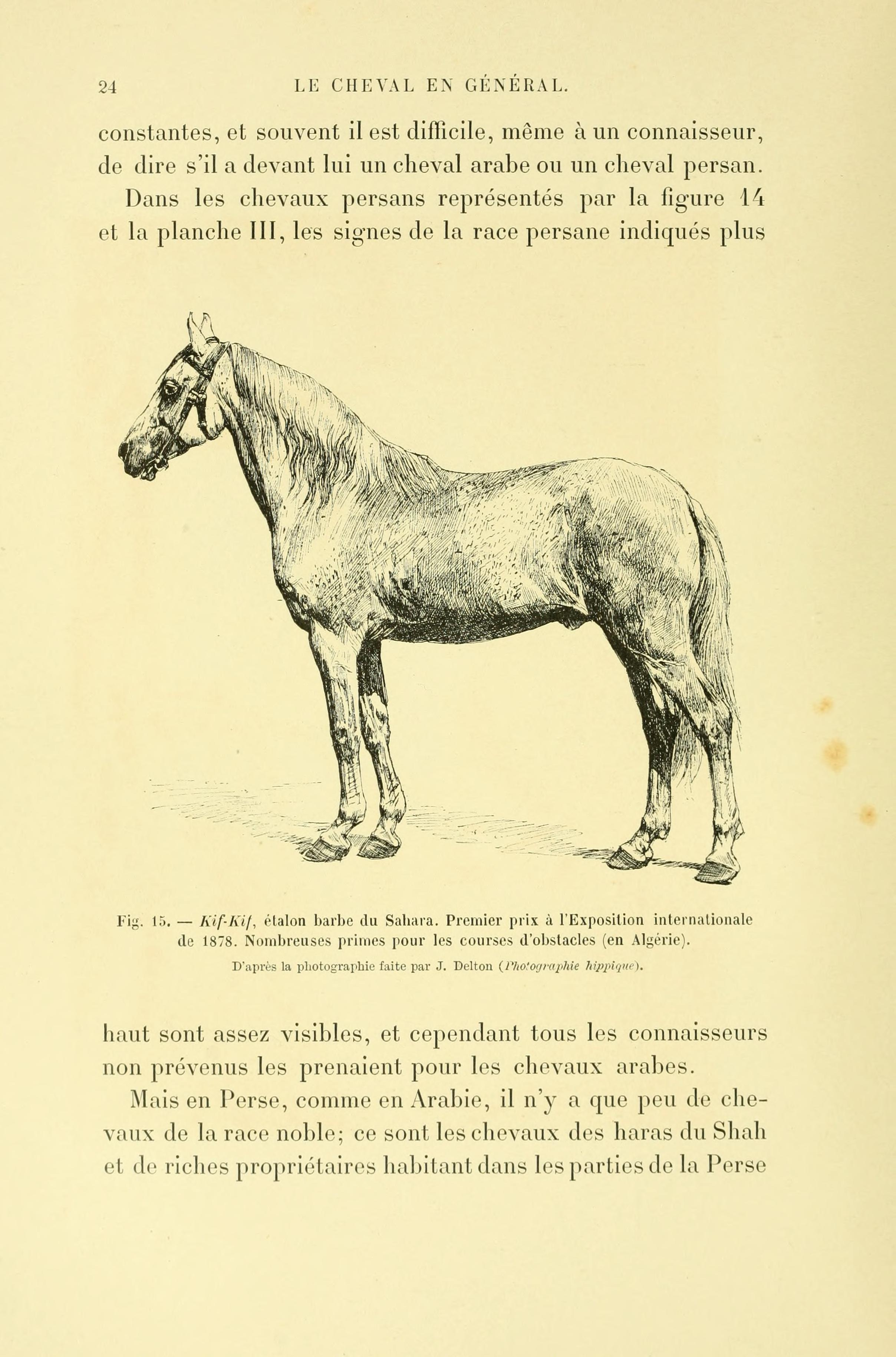 Fileles Races Chevalines Page 24 Bhl22833058jpg