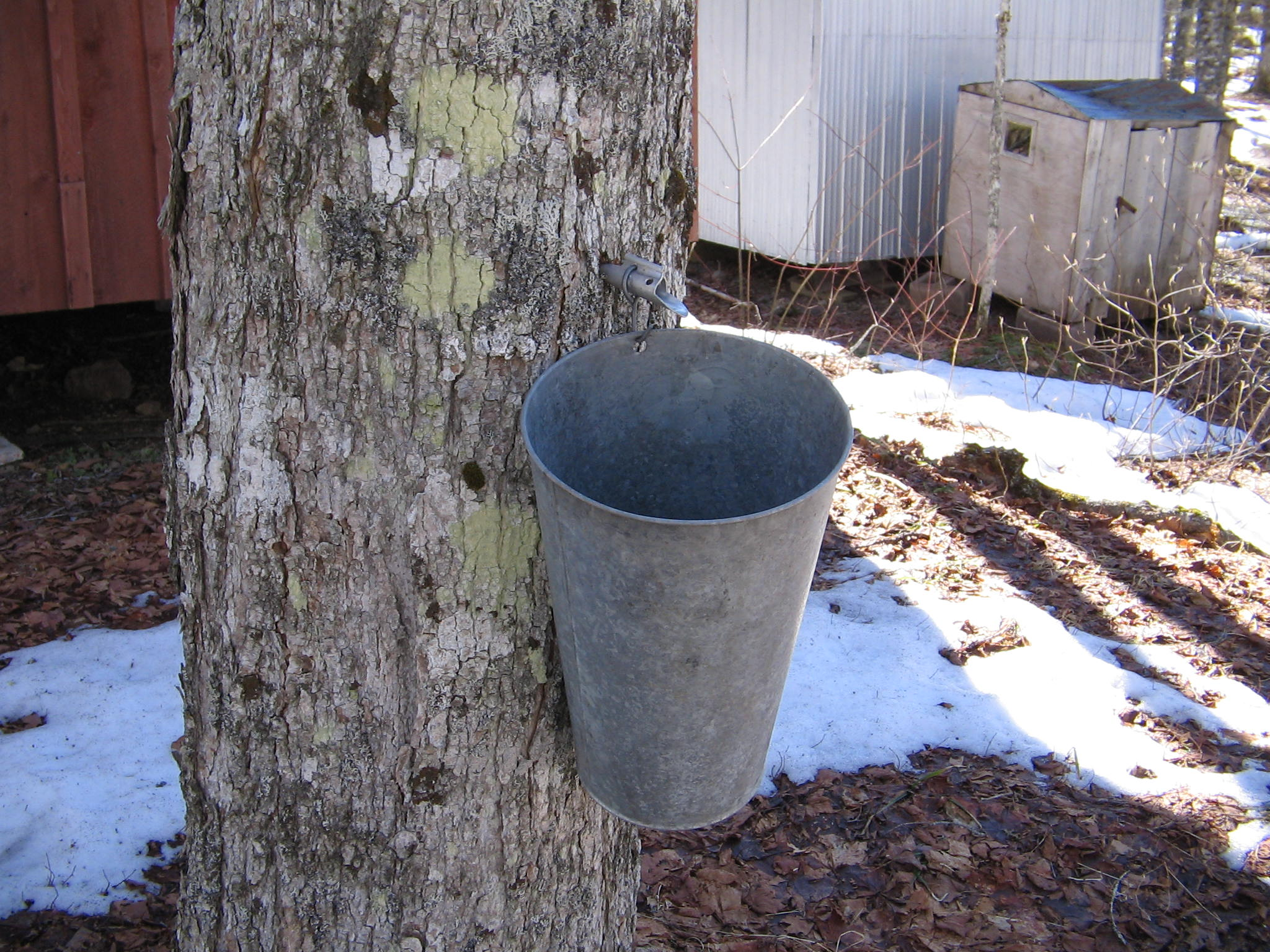 File:Maple syrup bucket.jpg  Wikimedia Commons