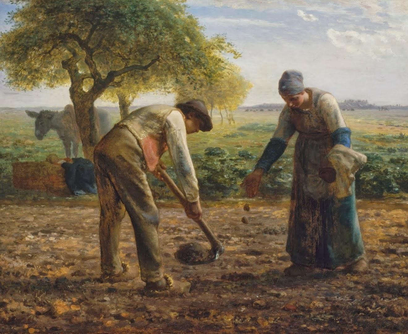 Fichier millet les planteurs de pommes de for Les decoratives brut de terre