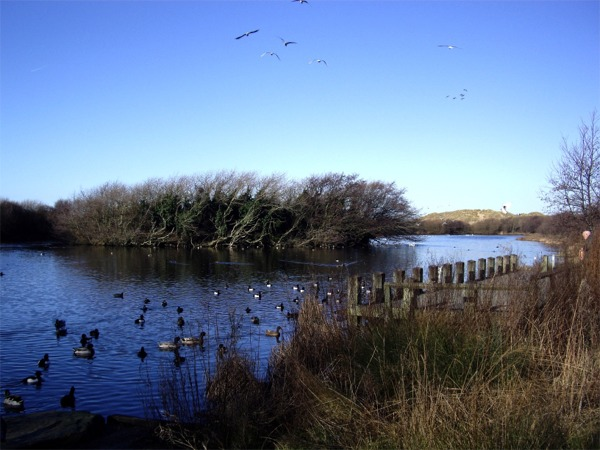 Nature reserve, Ainsdale - geograph.org.uk - 331012