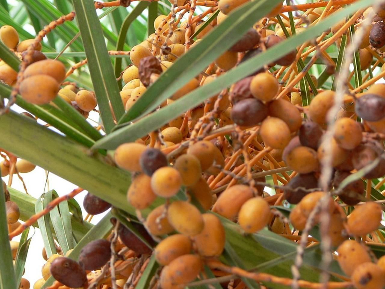 how to remove pesticides from fruits palm tree fruit