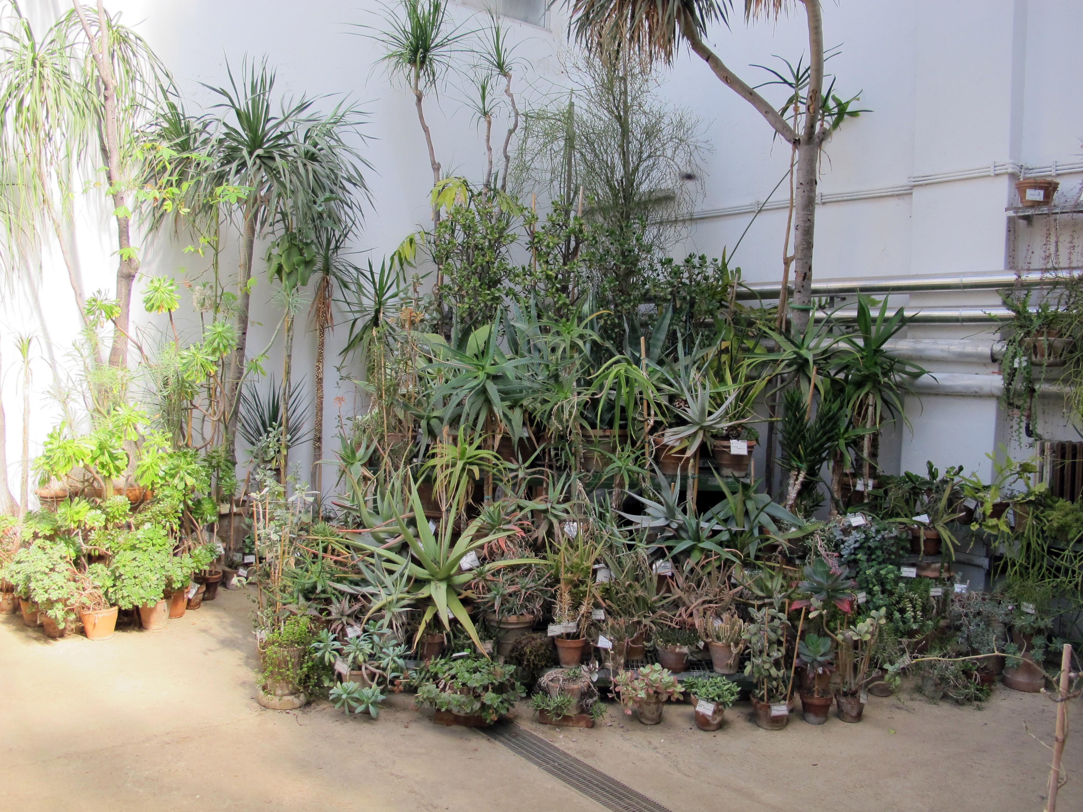 File orto botanico fi serra fredda piante grasse jpg for Serra piante grasse