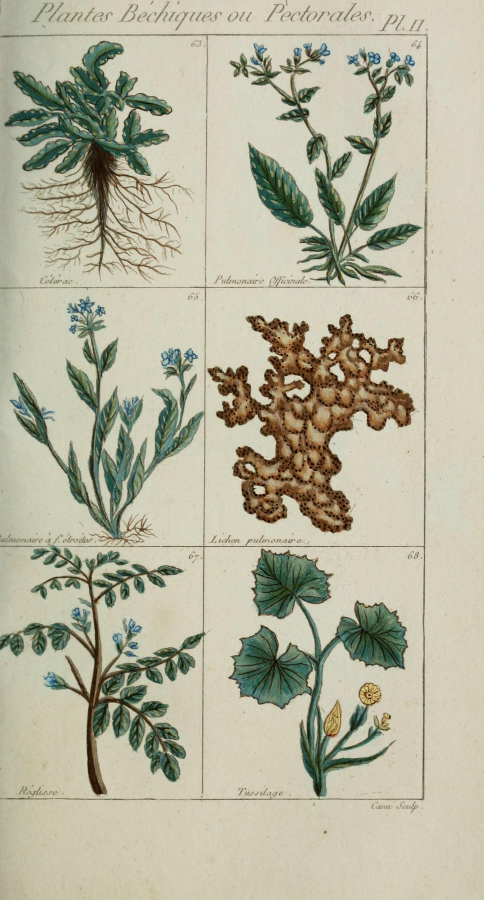File plantes usuelles indig nes et exotiques pl 11 for Plante exotique