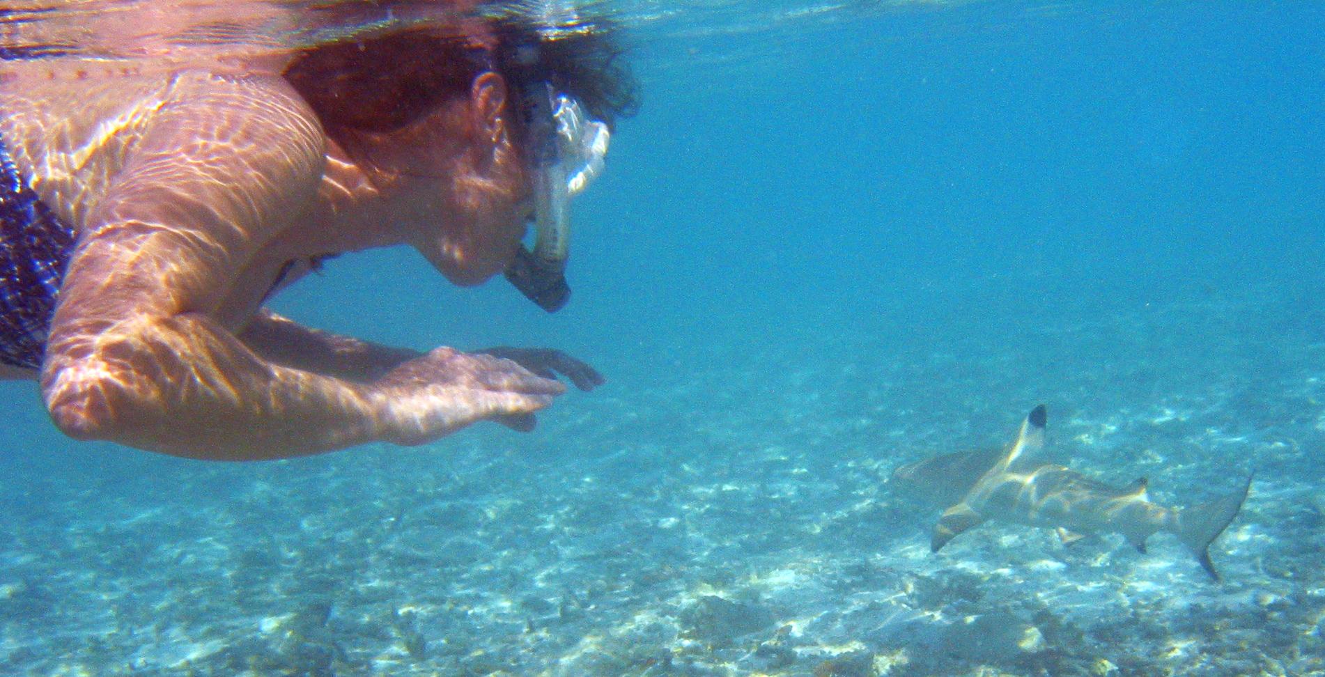 black tip shark bite - photo #26