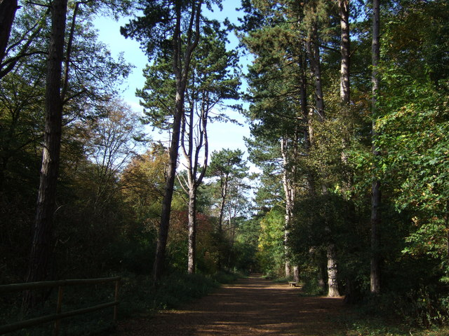 Track through the trees - geograph.org.uk - 1534200