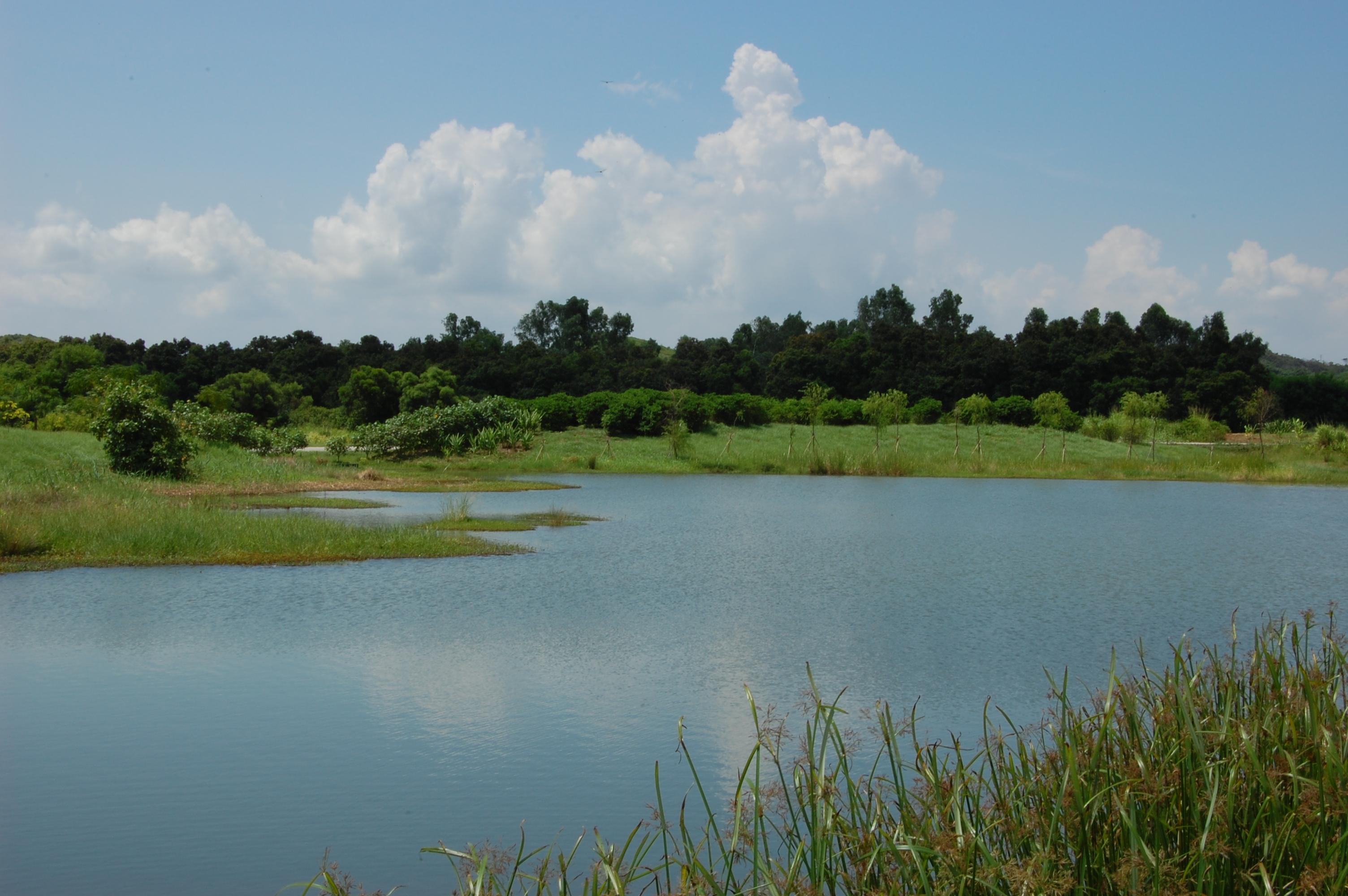 wetland hong kong.jpg
