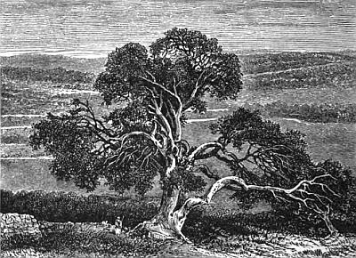 Abrahams_Oak,_1880.jpg (400×290)