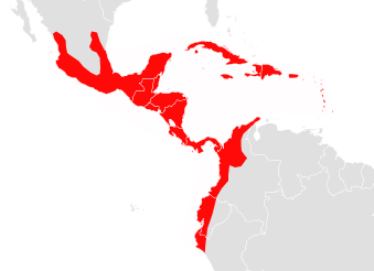Artibeus jamaicensis map.png