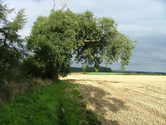 Ash Tree, Risby - geograph.org.uk - 235052