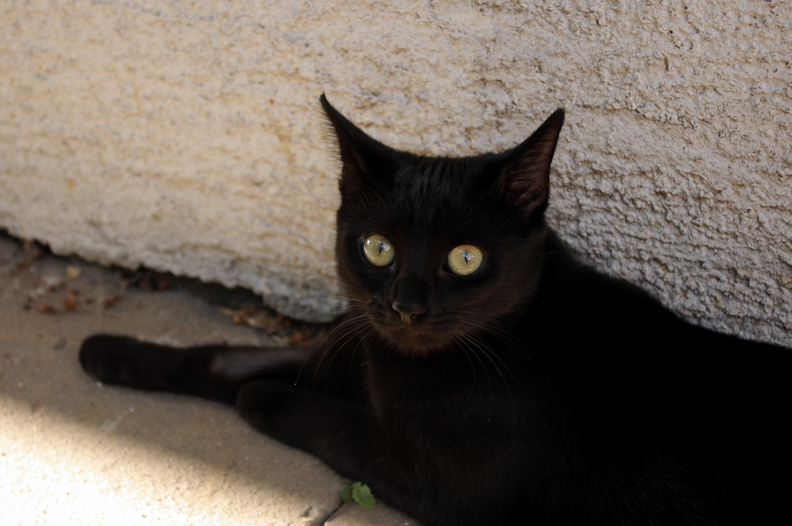 Black pussy chat