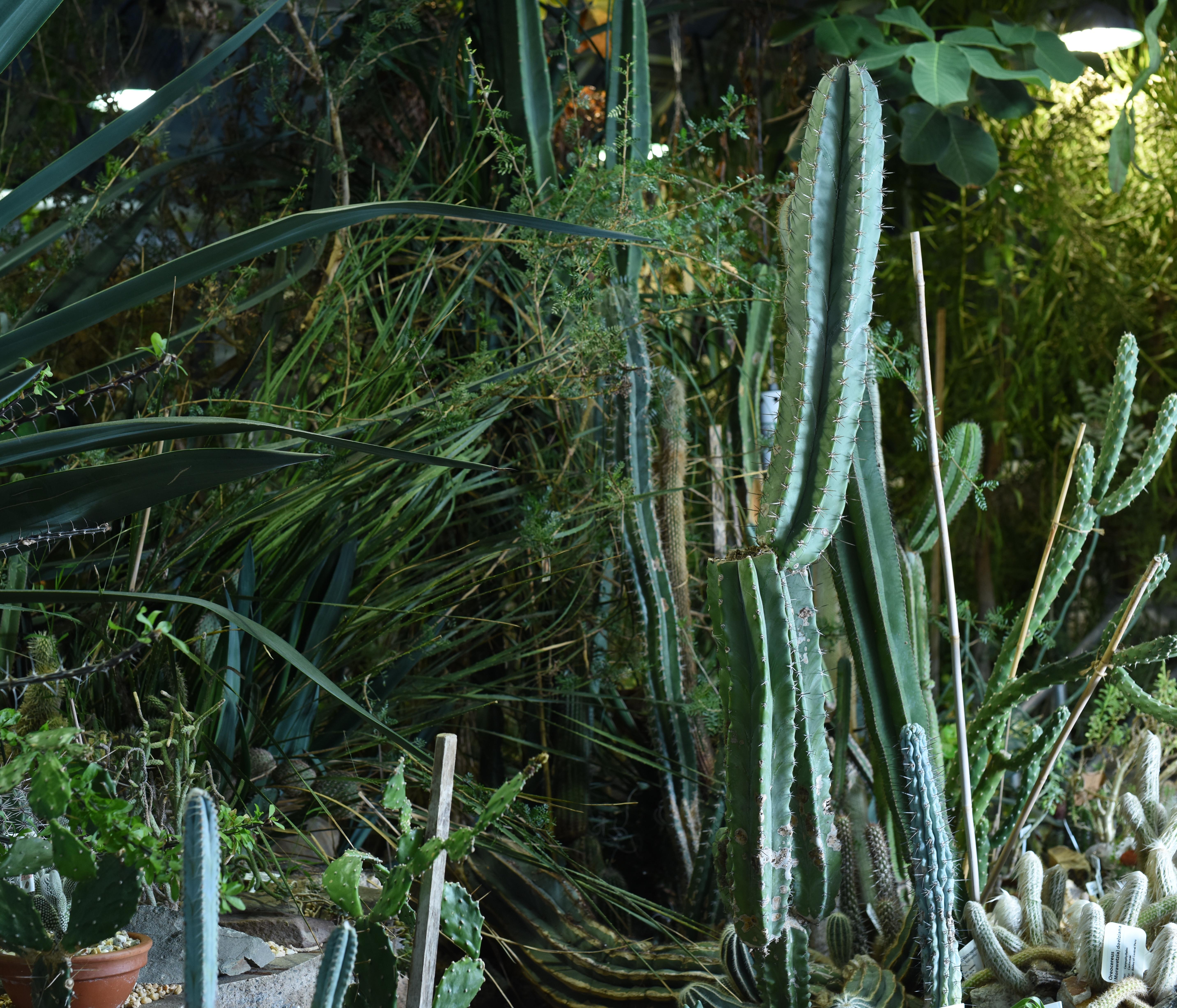 Marsh Botanical Garden Quiz